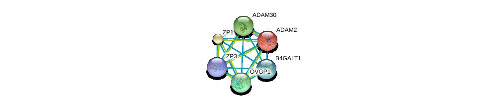 http://string-db.org/version_10/api/image/networkList?limit=0&targetmode=proteins&caller_identity=gene_cards&network_flavor=evidence&identifiers=9606.ENSP00000278853%0d%0a9606.ENSP00000358407%0d%0a9606.ENSP00000369055%0d%0a9606.ENSP00000358747%0d%0a9606.ENSP00000265708%0d%0a9606.ENSP00000378326%0d%0a