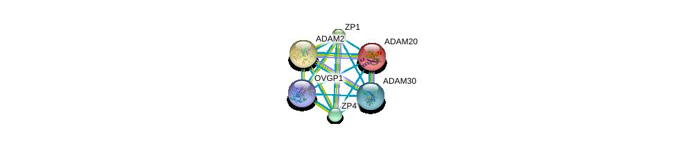 http://string-db.org/version_10/api/image/networkList?limit=0&targetmode=proteins&caller_identity=gene_cards&network_flavor=evidence&identifiers=9606.ENSP00000278853%0d%0a9606.ENSP00000358747%0d%0a9606.ENSP00000358407%0d%0a9606.ENSP00000355529%0d%0a9606.ENSP00000256389%0d%0a9606.ENSP00000265708%0d%0a