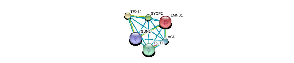 http://string-db.org/version_10/api/image/networkList?limit=0&targetmode=proteins&caller_identity=gene_cards&network_flavor=evidence&identifiers=9606.ENSP00000280358%0d%0a9606.ENSP00000377496%0d%0a9606.ENSP00000261366%0d%0a9606.ENSP00000350162%0d%0a9606.ENSP00000350249%0d%0a9606.ENSP00000385616%0d%0a