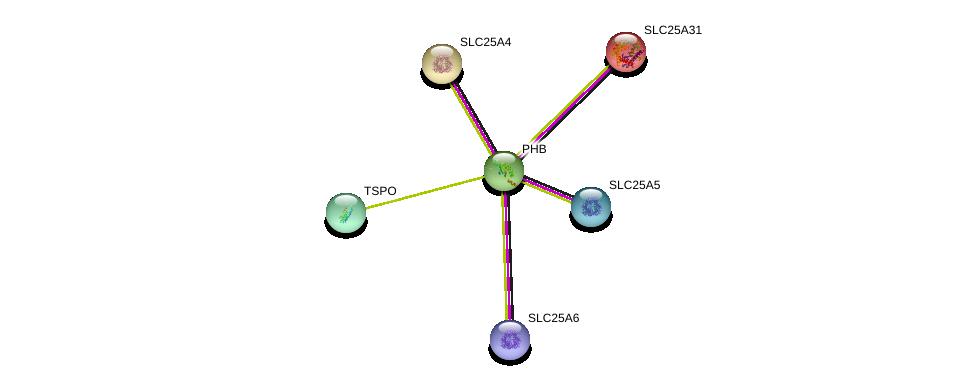 http://string-db.org/version_10/api/image/networkList?limit=0&targetmode=proteins&caller_identity=gene_cards&network_flavor=evidence&identifiers=9606.ENSP00000281154%0d%0a9606.ENSP00000360671%0d%0a9606.ENSP00000328973%0d%0a9606.ENSP00000370808%0d%0a9606.ENSP00000281456%0d%0a9606.ENSP00000300408%0d%0a