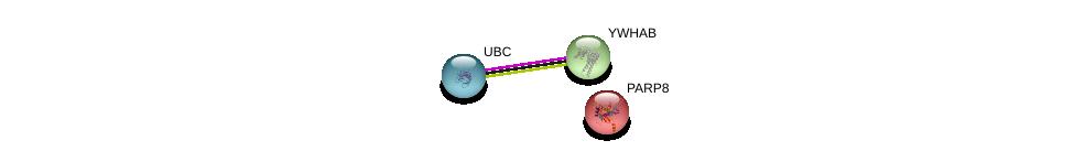 http://string-db.org/version_10/api/image/networkList?limit=0&targetmode=proteins&caller_identity=gene_cards&network_flavor=evidence&identifiers=9606.ENSP00000281631%0d%0a9606.ENSP00000344818%0d%0a9606.ENSP00000300161%0d%0a