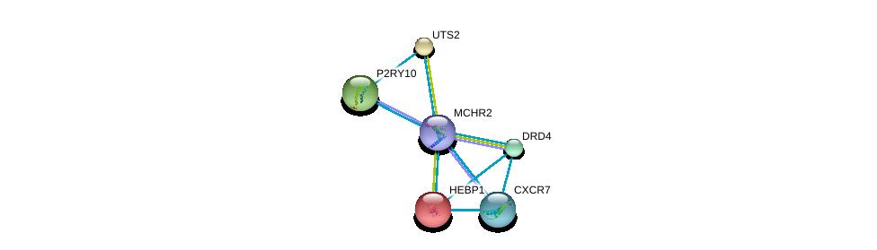 http://string-db.org/version_10/api/image/networkList?limit=0&targetmode=proteins&caller_identity=gene_cards&network_flavor=evidence&identifiers=9606.ENSP00000281806%0d%0a9606.ENSP00000272928%0d%0a9606.ENSP00000014930%0d%0a9606.ENSP00000054668%0d%0a9606.ENSP00000171757%0d%0a9606.ENSP00000176183%0d%0a