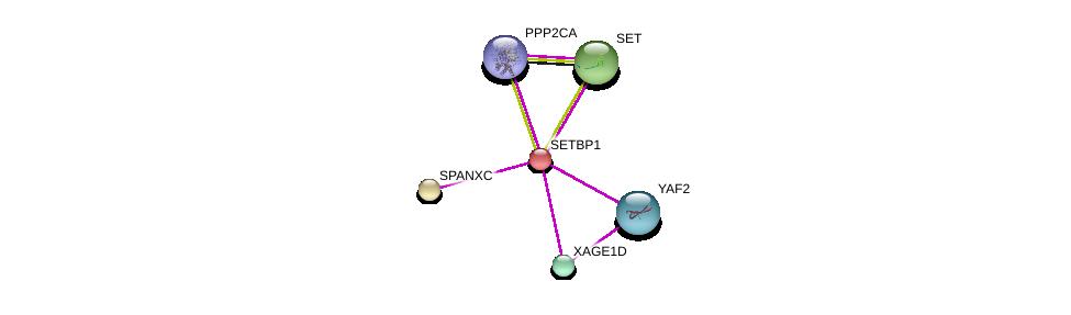http://string-db.org/version_10/api/image/networkList?limit=0&targetmode=proteins&caller_identity=gene_cards&network_flavor=evidence&identifiers=9606.ENSP00000282030%0d%0a9606.ENSP00000364728%0d%0a9606.ENSP00000401859%0d%0a9606.ENSP00000418447%0d%0a9606.ENSP00000361777%0d%0a9606.ENSP00000351884%0d%0a