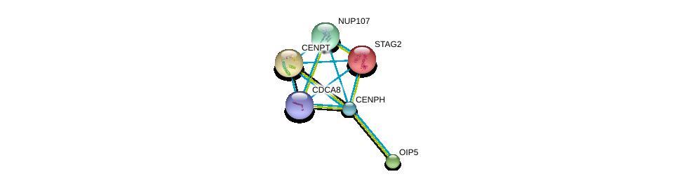 http://string-db.org/version_10/api/image/networkList?limit=0&targetmode=proteins&caller_identity=gene_cards&network_flavor=evidence&identifiers=9606.ENSP00000283006%0d%0a9606.ENSP00000316121%0d%0a9606.ENSP00000218089%0d%0a9606.ENSP00000219172%0d%0a9606.ENSP00000220514%0d%0a9606.ENSP00000229179%0d%0a