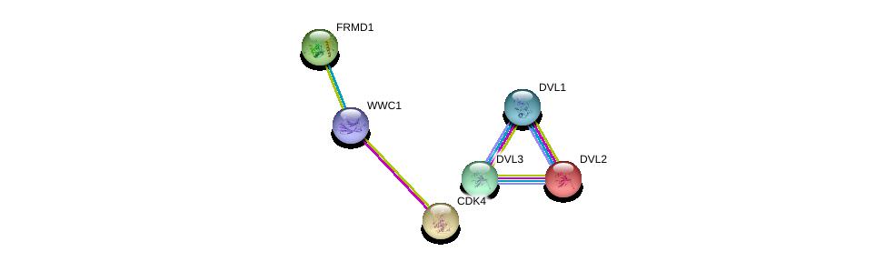 http://string-db.org/version_10/api/image/networkList?limit=0&targetmode=proteins&caller_identity=gene_cards&network_flavor=evidence&identifiers=9606.ENSP00000283309%0d%0a9606.ENSP00000427772%0d%0a9606.ENSP00000316054%0d%0a9606.ENSP00000368169%0d%0a9606.ENSP00000005340%0d%0a9606.ENSP00000257904%0d%0a