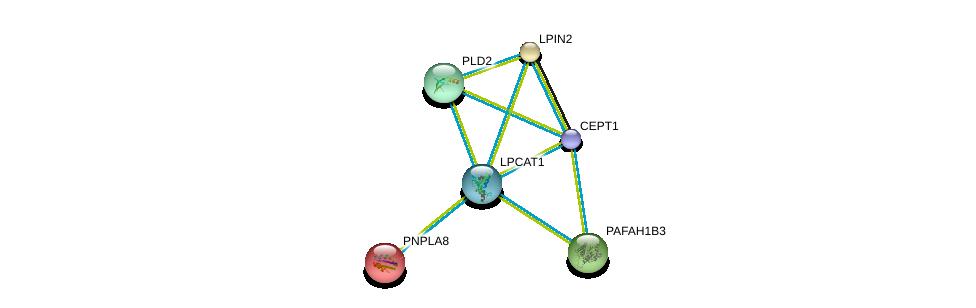 http://string-db.org/version_10/api/image/networkList?limit=0&targetmode=proteins&caller_identity=gene_cards&network_flavor=evidence&identifiers=9606.ENSP00000283415%0d%0a9606.ENSP00000349696%0d%0a9606.ENSP00000257694%0d%0a9606.ENSP00000261596%0d%0a9606.ENSP00000262890%0d%0a9606.ENSP00000263088%0d%0a