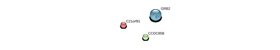 http://string-db.org/version_10/api/image/networkList?limit=0&targetmode=proteins&caller_identity=gene_cards&network_flavor=evidence&identifiers=9606.ENSP00000284881%0d%0a9606.ENSP00000311695%0d%0a9606.ENSP00000339007%0d%0a