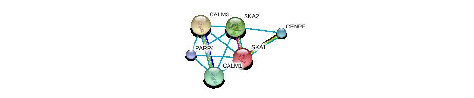 http://string-db.org/version_10/api/image/networkList?limit=0&targetmode=proteins&caller_identity=gene_cards&network_flavor=evidence&identifiers=9606.ENSP00000285116%0d%0a9606.ENSP00000333433%0d%0a9606.ENSP00000355922%0d%0a9606.ENSP00000349467%0d%0a9606.ENSP00000371419%0d%0a9606.ENSP00000291295%0d%0a
