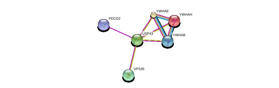 http://string-db.org/version_10/api/image/networkList?limit=0&targetmode=proteins&caller_identity=gene_cards&network_flavor=evidence&identifiers=9606.ENSP00000285199%0d%0a9606.ENSP00000248975%0d%0a9606.ENSP00000300161%0d%0a9606.ENSP00000264335%0d%0a9606.ENSP00000439467%0d%0a9606.ENSP00000299138%0d%0a
