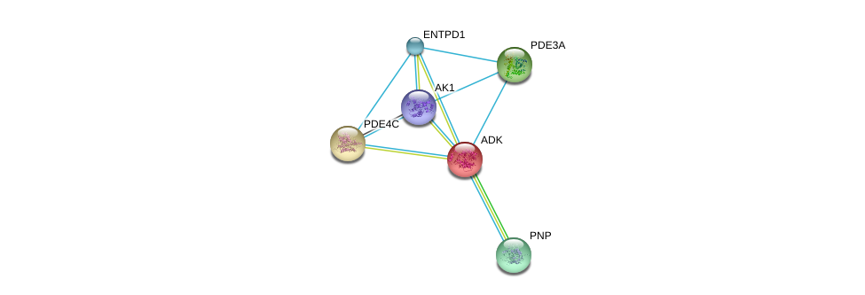 http://string-db.org/version_10/api/image/networkList?limit=0&targetmode=proteins&caller_identity=gene_cards&network_flavor=evidence&identifiers=9606.ENSP00000286621%0d%0a9606.ENSP00000351957%0d%0a9606.ENSP00000354532%0d%0a9606.ENSP00000360250%0d%0a9606.ENSP00000347689%0d%0a9606.ENSP00000362249%0d%0a