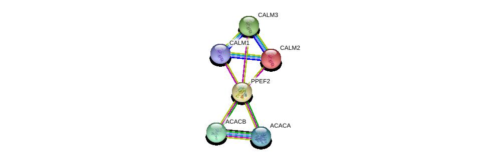http://string-db.org/version_10/api/image/networkList?limit=0&targetmode=proteins&caller_identity=gene_cards&network_flavor=evidence&identifiers=9606.ENSP00000286719%0d%0a9606.ENSP00000272298%0d%0a9606.ENSP00000349467%0d%0a9606.ENSP00000291295%0d%0a9606.ENSP00000344789%0d%0a9606.ENSP00000341044%0d%0a