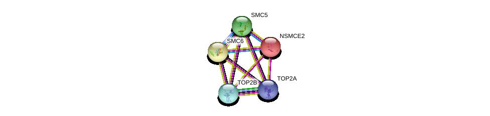 http://string-db.org/version_10/api/image/networkList?limit=0&targetmode=proteins&caller_identity=gene_cards&network_flavor=evidence&identifiers=9606.ENSP00000287437%0d%0a9606.ENSP00000354957%0d%0a9606.ENSP00000323439%0d%0a9606.ENSP00000396704%0d%0a9606.ENSP00000396704%0d%0a9606.ENSP00000411532%0d%0a