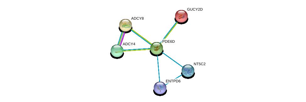 http://string-db.org/version_10/api/image/networkList?limit=0&targetmode=proteins&caller_identity=gene_cards&network_flavor=evidence&identifiers=9606.ENSP00000287600%0d%0a9606.ENSP00000286355%0d%0a9606.ENSP00000339479%0d%0a9606.ENSP00000312126%0d%0a9606.ENSP00000254854%0d%0a9606.ENSP00000365840%0d%0a