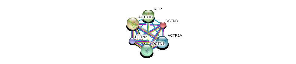 http://string-db.org/version_10/api/image/networkList?limit=0&targetmode=proteins&caller_identity=gene_cards&network_flavor=evidence&identifiers=9606.ENSP00000289228%0d%0a9606.ENSP00000408910%0d%0a9606.ENSP00000259632%0d%0a9606.ENSP00000358921%0d%0a9606.ENSP00000354791%0d%0a9606.ENSP00000301336%0d%0a