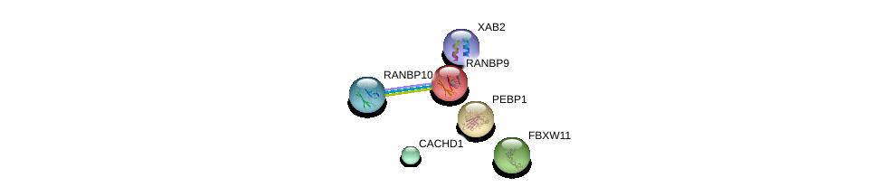 http://string-db.org/version_10/api/image/networkList?limit=0&targetmode=proteins&caller_identity=gene_cards&network_flavor=evidence&identifiers=9606.ENSP00000290039%0d%0a9606.ENSP00000265094%0d%0a9606.ENSP00000351137%0d%0a9606.ENSP00000316589%0d%0a9606.ENSP00000261313%0d%0a9606.ENSP00000011619%0d%0a