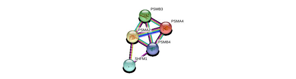 http://string-db.org/version_10/api/image/networkList?limit=0&targetmode=proteins&caller_identity=gene_cards&network_flavor=evidence&identifiers=9606.ENSP00000290541%0d%0a9606.ENSP00000044462%0d%0a9606.ENSP00000223321%0d%0a9606.ENSP00000225426%0d%0a9606.ENSP00000248566%0d%0a9606.ENSP00000248566%0d%0a