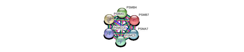 http://string-db.org/version_10/api/image/networkList?limit=0&targetmode=proteins&caller_identity=gene_cards&network_flavor=evidence&identifiers=9606.ENSP00000290541%0d%0a9606.ENSP00000259457%0d%0a9606.ENSP00000310572%0d%0a9606.ENSP00000359910%0d%0a9606.ENSP00000386541%0d%0a9606.ENSP00000271308%0d%0a