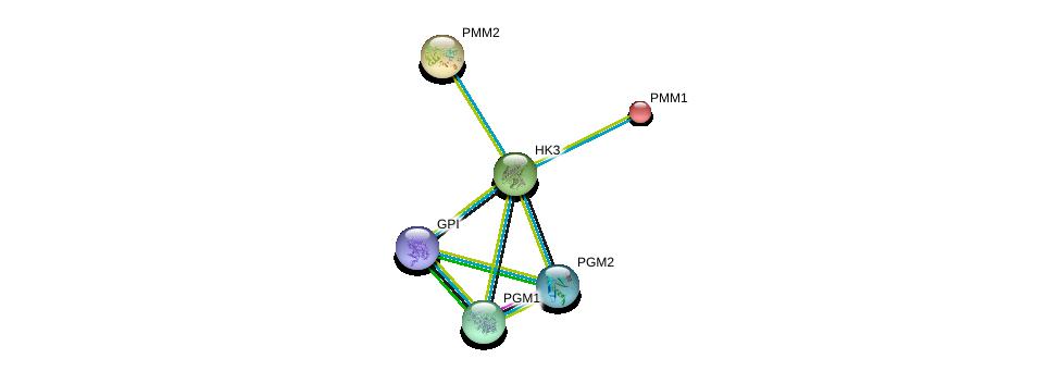 http://string-db.org/version_10/api/image/networkList?limit=0&targetmode=proteins&caller_identity=gene_cards&network_flavor=evidence&identifiers=9606.ENSP00000292432%0d%0a9606.ENSP00000268261%0d%0a9606.ENSP00000371393%0d%0a9606.ENSP00000216259%0d%0a9606.ENSP00000405573%0d%0a9606.ENSP00000360124%0d%0a
