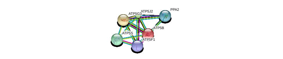 http://string-db.org/version_10/api/image/networkList?limit=0&targetmode=proteins&caller_identity=gene_cards&network_flavor=evidence&identifiers=9606.ENSP00000292475%0d%0a9606.ENSP00000358737%0d%0a9606.ENSP00000262030%0d%0a9606.ENSP00000284727%0d%0a9606.ENSP00000308334%0d%0a9606.ENSP00000343885%0d%0a
