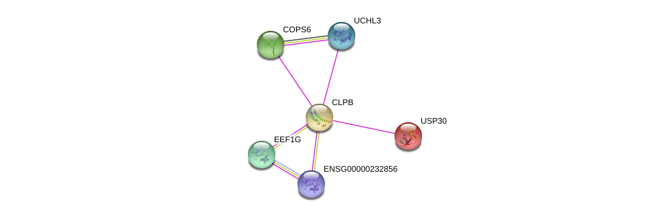 http://string-db.org/version_10/api/image/networkList?limit=0&targetmode=proteins&caller_identity=gene_cards&network_flavor=evidence&identifiers=9606.ENSP00000294053%0d%0a9606.ENSP00000366819%0d%0a9606.ENSP00000304102%0d%0a9606.ENSP00000403936%0d%0a9606.ENSP00000331901%0d%0a9606.ENSP00000257548%0d%0a