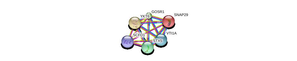 http://string-db.org/version_10/api/image/networkList?limit=0&targetmode=proteins&caller_identity=gene_cards&network_flavor=evidence&identifiers=9606.ENSP00000294179%0d%0a9606.ENSP00000390783%0d%0a9606.ENSP00000225724%0d%0a9606.ENSP00000223369%0d%0a9606.ENSP00000215730%0d%0a9606.ENSP00000376792%0d%0a
