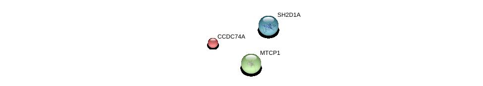 http://string-db.org/version_10/api/image/networkList?limit=0&targetmode=proteins&caller_identity=gene_cards&network_flavor=evidence&identifiers=9606.ENSP00000295171%0d%0a9606.ENSP00000355058%0d%0a9606.ENSP00000360181%0d%0a