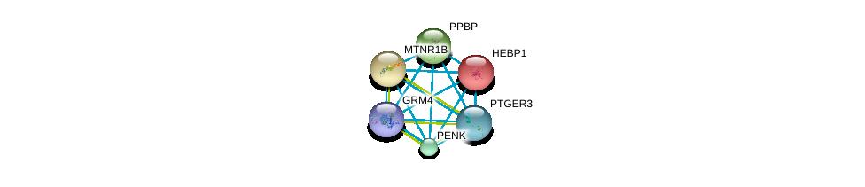 http://string-db.org/version_10/api/image/networkList?limit=0&targetmode=proteins&caller_identity=gene_cards&network_flavor=evidence&identifiers=9606.ENSP00000296028%0d%0a9606.ENSP00000363296%0d%0a9606.ENSP00000014930%0d%0a9606.ENSP00000349003%0d%0a9606.ENSP00000257068%0d%0a9606.ENSP00000324248%0d%0a