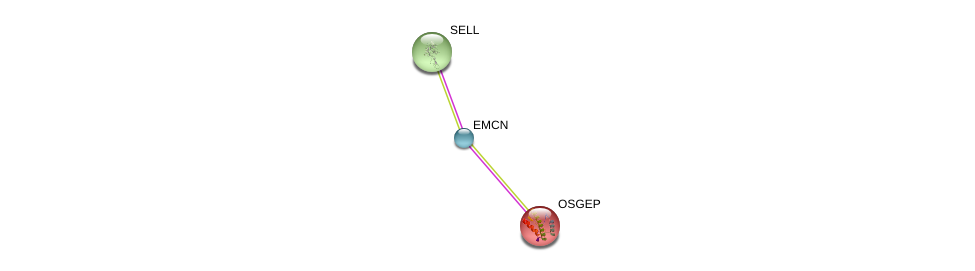 http://string-db.org/version_10/api/image/networkList?limit=0&targetmode=proteins&caller_identity=gene_cards&network_flavor=evidence&identifiers=9606.ENSP00000296420%0d%0a9606.ENSP00000236147%0d%0a9606.ENSP00000206542%0d%0a
