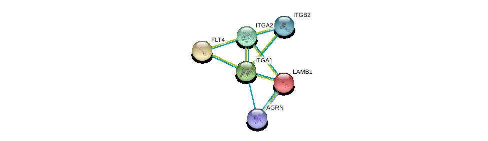 http://string-db.org/version_10/api/image/networkList?limit=0&targetmode=proteins&caller_identity=gene_cards&network_flavor=evidence&identifiers=9606.ENSP00000296585%0d%0a9606.ENSP00000303242%0d%0a9606.ENSP00000368678%0d%0a9606.ENSP00000282588%0d%0a9606.ENSP00000222399%0d%0a9606.ENSP00000261937%0d%0a
