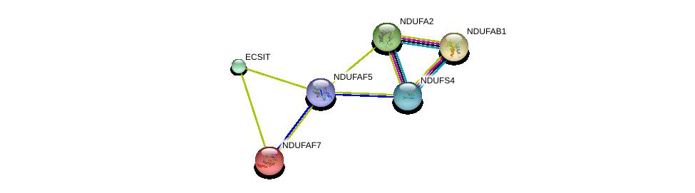 http://string-db.org/version_10/api/image/networkList?limit=0&targetmode=proteins&caller_identity=gene_cards&network_flavor=evidence&identifiers=9606.ENSP00000296684%0d%0a9606.ENSP00000007516%0d%0a9606.ENSP00000252102%0d%0a9606.ENSP00000270517%0d%0a9606.ENSP00000367346%0d%0a9606.ENSP00000002125%0d%0a