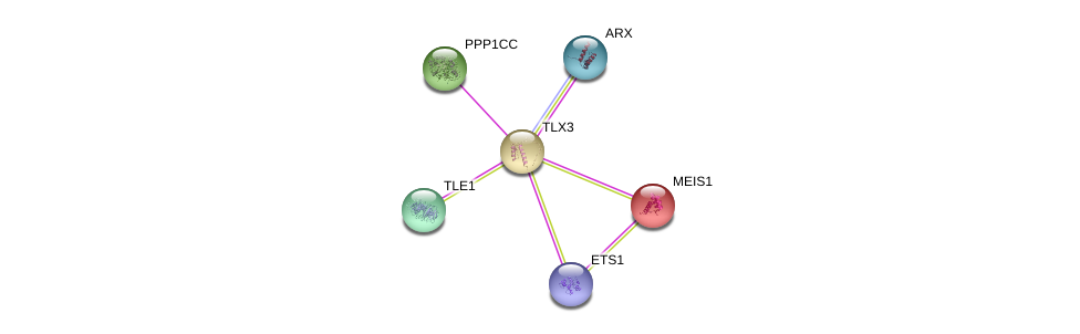 http://string-db.org/version_10/api/image/networkList?limit=0&targetmode=proteins&caller_identity=gene_cards&network_flavor=evidence&identifiers=9606.ENSP00000296921%0d%0a9606.ENSP00000365682%0d%0a9606.ENSP00000272369%0d%0a9606.ENSP00000376436%0d%0a9606.ENSP00000335084%0d%0a9606.ENSP00000368332%0d%0a