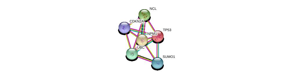 http://string-db.org/version_10/api/image/networkList?limit=0&targetmode=proteins&caller_identity=gene_cards&network_flavor=evidence&identifiers=9606.ENSP00000296930%0d%0a9606.ENSP00000394932%0d%0a9606.ENSP00000344818%0d%0a9606.ENSP00000318195%0d%0a9606.ENSP00000376076%0d%0a9606.ENSP00000269305%0d%0a