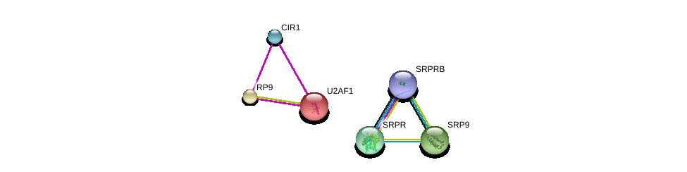 http://string-db.org/version_10/api/image/networkList?limit=0&targetmode=proteins&caller_identity=gene_cards&network_flavor=evidence&identifiers=9606.ENSP00000297157%0d%0a9606.ENSP00000328023%0d%0a9606.ENSP00000305230%0d%0a9606.ENSP00000418401%0d%0a9606.ENSP00000291552%0d%0a9606.ENSP00000339723%0d%0a