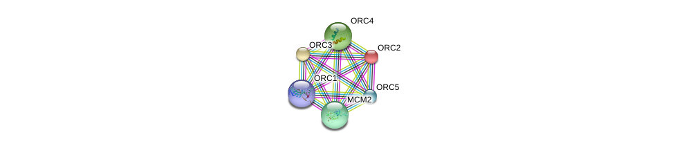 http://string-db.org/version_10/api/image/networkList?limit=0&targetmode=proteins&caller_identity=gene_cards&network_flavor=evidence&identifiers=9606.ENSP00000297431%0d%0a9606.ENSP00000234296%0d%0a9606.ENSP00000265056%0d%0a9606.ENSP00000360621%0d%0a9606.ENSP00000257789%0d%0a9606.ENSP00000264169%0d%0a