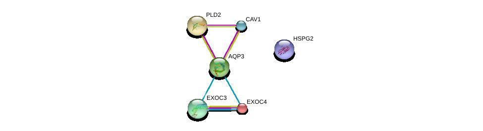 http://string-db.org/version_10/api/image/networkList?limit=0&targetmode=proteins&caller_identity=gene_cards&network_flavor=evidence&identifiers=9606.ENSP00000297991%0d%0a9606.ENSP00000323377%0d%0a9606.ENSP00000253861%0d%0a9606.ENSP00000263088%0d%0a9606.ENSP00000339191%0d%0a9606.ENSP00000363827%0d%0a