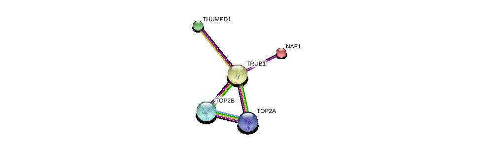 http://string-db.org/version_10/api/image/networkList?limit=0&targetmode=proteins&caller_identity=gene_cards&network_flavor=evidence&identifiers=9606.ENSP00000298746%0d%0a9606.ENSP00000370741%0d%0a9606.ENSP00000411532%0d%0a9606.ENSP00000396704%0d%0a9606.ENSP00000396704%0d%0a9606.ENSP00000274054%0d%0a
