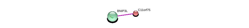 http://string-db.org/version_10/api/image/networkList?limit=0&targetmode=proteins&caller_identity=gene_cards&network_flavor=evidence&identifiers=9606.ENSP00000298966%0d%0a9606.ENSP00000370003%0d%0a