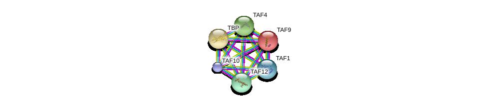 http://string-db.org/version_10/api/image/networkList?limit=0&targetmode=proteins&caller_identity=gene_cards&network_flavor=evidence&identifiers=9606.ENSP00000299424%0d%0a9606.ENSP00000217893%0d%0a9606.ENSP00000230354%0d%0a9606.ENSP00000252996%0d%0a9606.ENSP00000263974%0d%0a9606.ENSP00000276072%0d%0a
