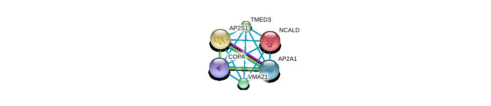 http://string-db.org/version_10/api/image/networkList?limit=0&targetmode=proteins&caller_identity=gene_cards&network_flavor=evidence&identifiers=9606.ENSP00000299705%0d%0a9606.ENSP00000263270%0d%0a9606.ENSP00000357048%0d%0a9606.ENSP00000351926%0d%0a9606.ENSP00000220931%0d%0a9606.ENSP00000333255%0d%0a