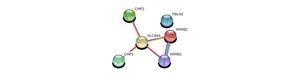 http://string-db.org/version_10/api/image/networkList?limit=0&targetmode=proteins&caller_identity=gene_cards&network_flavor=evidence&identifiers=9606.ENSP00000299798%0d%0a9606.ENSP00000300113%0d%0a9606.ENSP00000335632%0d%0a9606.ENSP00000269260%0d%0a9606.ENSP00000409581%0d%0a9606.ENSP00000384169%0d%0a