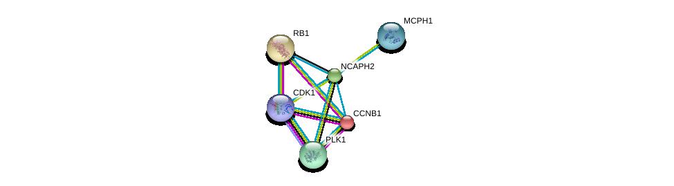 http://string-db.org/version_10/api/image/networkList?limit=0&targetmode=proteins&caller_identity=gene_cards&network_flavor=evidence&identifiers=9606.ENSP00000299821%0d%0a9606.ENSP00000256442%0d%0a9606.ENSP00000342924%0d%0a9606.ENSP00000378699%0d%0a9606.ENSP00000267163%0d%0a9606.ENSP00000300093%0d%0a