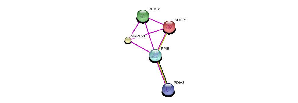 http://string-db.org/version_10/api/image/networkList?limit=0&targetmode=proteins&caller_identity=gene_cards&network_flavor=evidence&identifiers=9606.ENSP00000300026%0d%0a9606.ENSP00000247001%0d%0a9606.ENSP00000300289%0d%0a9606.ENSP00000294904%0d%0a9606.ENSP00000294904%0d%0a9606.ENSP00000258105%0d%0a