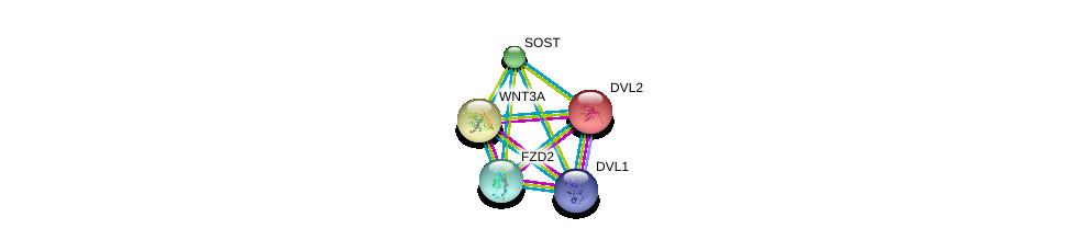 http://string-db.org/version_10/api/image/networkList?limit=0&targetmode=proteins&caller_identity=gene_cards&network_flavor=evidence&identifiers=9606.ENSP00000301691%0d%0a9606.ENSP00000323901%0d%0a9606.ENSP00000368169%0d%0a9606.ENSP00000368169%0d%0a9606.ENSP00000005340%0d%0a9606.ENSP00000284523%0d%0a