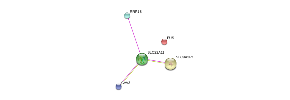 http://string-db.org/version_10/api/image/networkList?limit=0&targetmode=proteins&caller_identity=gene_cards&network_flavor=evidence&identifiers=9606.ENSP00000301891%0d%0a9606.ENSP00000262613%0d%0a9606.ENSP00000262613%0d%0a9606.ENSP00000341940%0d%0a9606.ENSP00000339145%0d%0a9606.ENSP00000254108%0d%0a