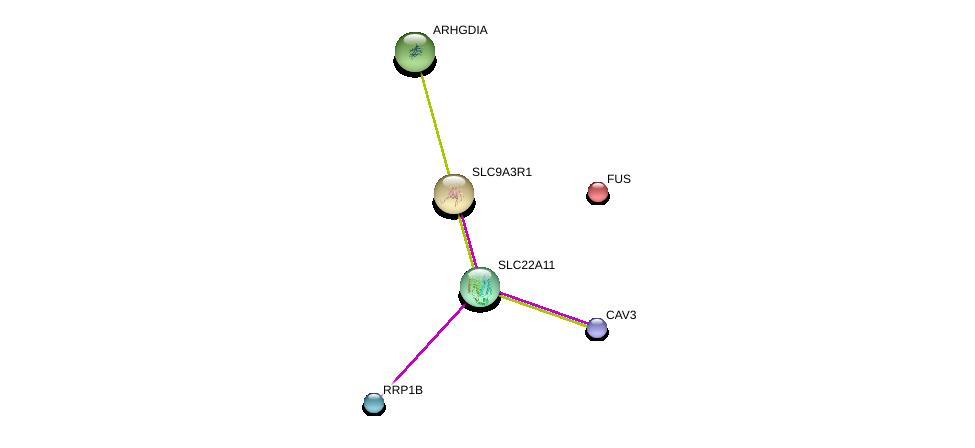 http://string-db.org/version_10/api/image/networkList?limit=0&targetmode=proteins&caller_identity=gene_cards&network_flavor=evidence&identifiers=9606.ENSP00000301891%0d%0a9606.ENSP00000341940%0d%0a9606.ENSP00000262613%0d%0a9606.ENSP00000339145%0d%0a9606.ENSP00000254108%0d%0a9606.ENSP00000269321%0d%0a