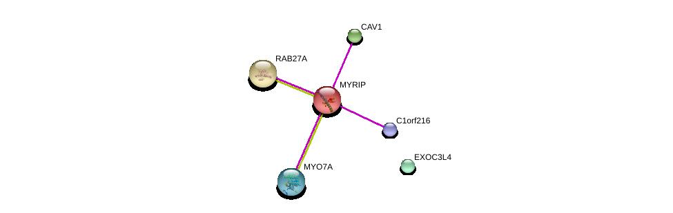 http://string-db.org/version_10/api/image/networkList?limit=0&targetmode=proteins&caller_identity=gene_cards&network_flavor=evidence&identifiers=9606.ENSP00000301972%0d%0a9606.ENSP00000339191%0d%0a9606.ENSP00000386331%0d%0a9606.ENSP00000337761%0d%0a9606.ENSP00000425166%0d%0a9606.ENSP00000369409%0d%0a