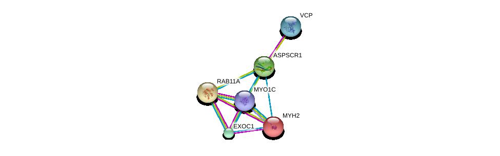 http://string-db.org/version_10/api/image/networkList?limit=0&targetmode=proteins&caller_identity=gene_cards&network_flavor=evidence&identifiers=9606.ENSP00000302176%0d%0a9606.ENSP00000351777%0d%0a9606.ENSP00000245503%0d%0a9606.ENSP00000352834%0d%0a9606.ENSP00000326514%0d%0a9606.ENSP00000261890%0d%0a