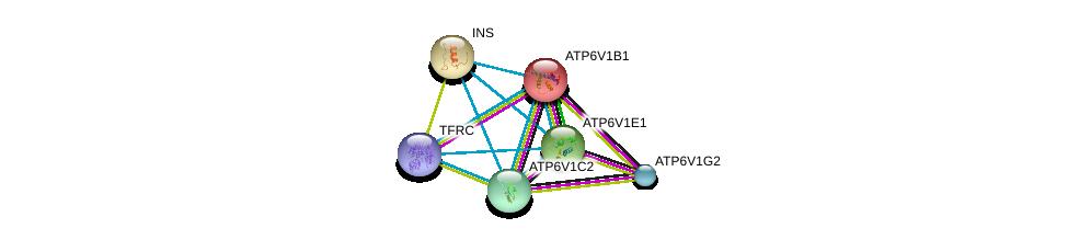 http://string-db.org/version_10/api/image/networkList?limit=0&targetmode=proteins&caller_identity=gene_cards&network_flavor=evidence&identifiers=9606.ENSP00000302194%0d%0a9606.ENSP00000272238%0d%0a9606.ENSP00000234396%0d%0a9606.ENSP00000253413%0d%0a9606.ENSP00000353224%0d%0a9606.ENSP00000250971%0d%0a