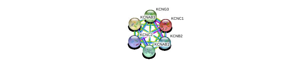 http://string-db.org/version_10/api/image/networkList?limit=0&targetmode=proteins&caller_identity=gene_cards&network_flavor=evidence&identifiers=9606.ENSP00000302719%0d%0a9606.ENSP00000419952%0d%0a9606.ENSP00000449253%0d%0a9606.ENSP00000304127%0d%0a9606.ENSP00000430846%0d%0a9606.ENSP00000265969%0d%0a