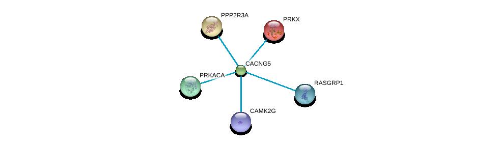 http://string-db.org/version_10/api/image/networkList?limit=0&targetmode=proteins&caller_identity=gene_cards&network_flavor=evidence&identifiers=9606.ENSP00000303092%0d%0a9606.ENSP00000262848%0d%0a9606.ENSP00000264977%0d%0a9606.ENSP00000309591%0d%0a9606.ENSP00000310244%0d%0a9606.ENSP00000319060%0d%0a